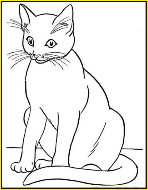 contoh gambar sketsa kucing berkumis