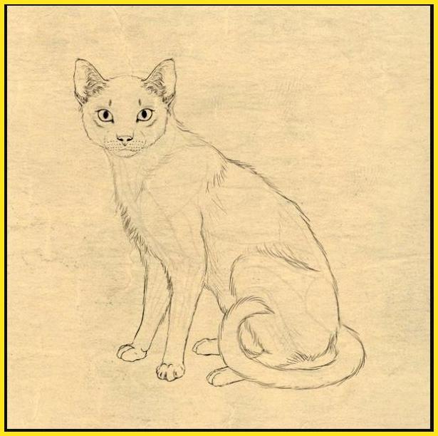contoh gambar sketsa kucing lokal