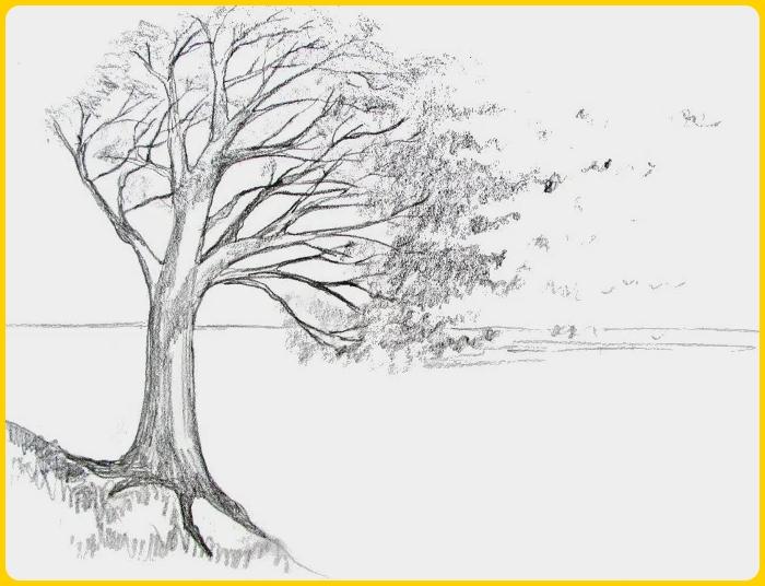 contoh sketsaa gambar pohon