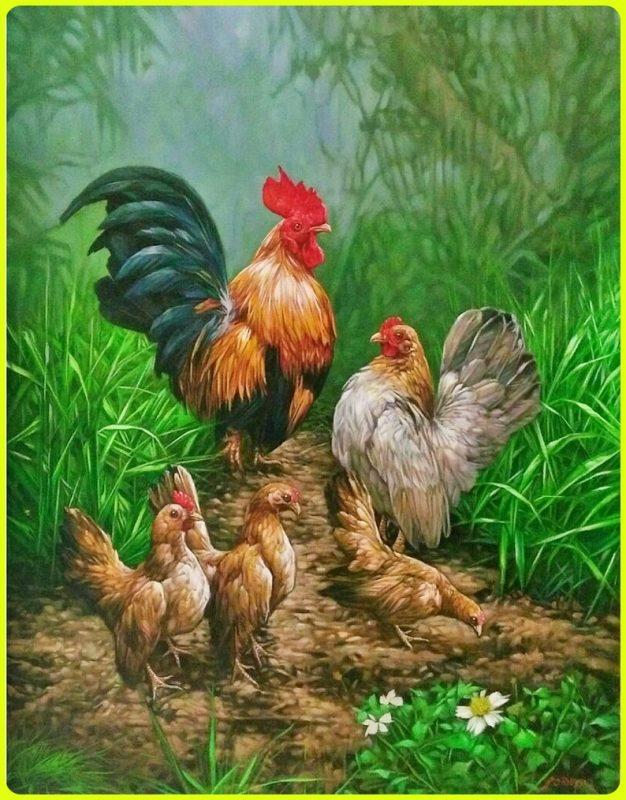 gambar ayam kate betina dan jantan