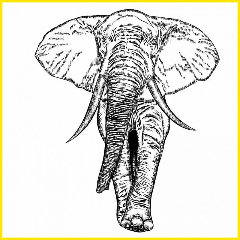 gambar gajah hitam putih