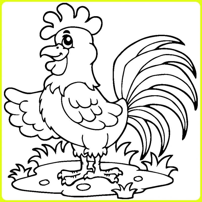 gambar kartun ayam jantan