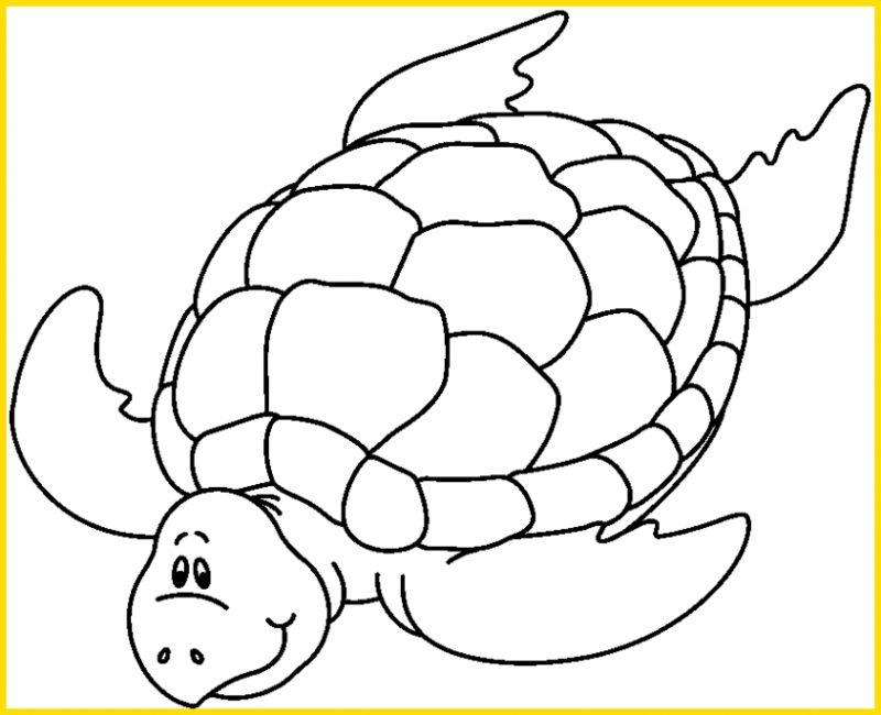 gambar kura kura hitam putih