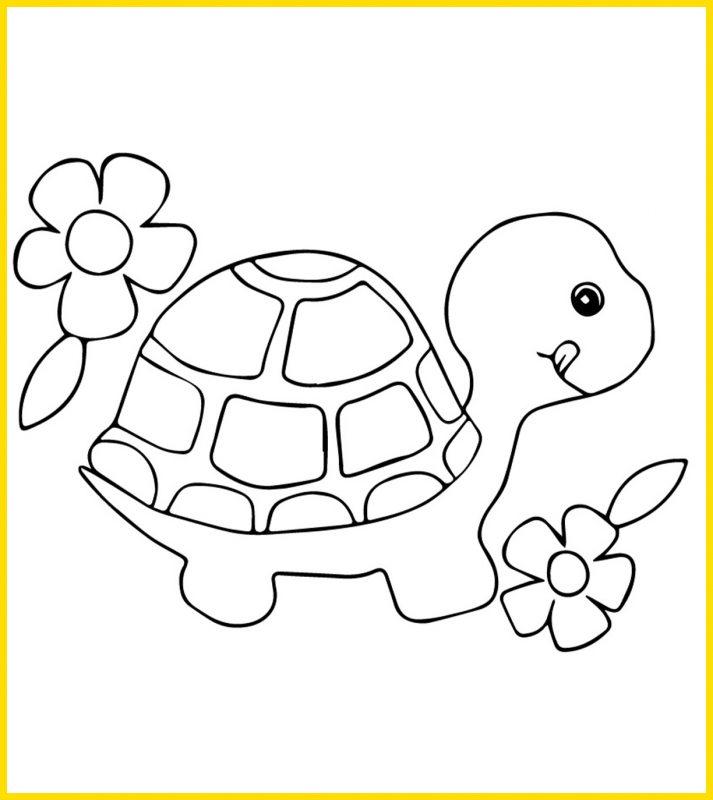 gambar kura kura untuk mewarnai