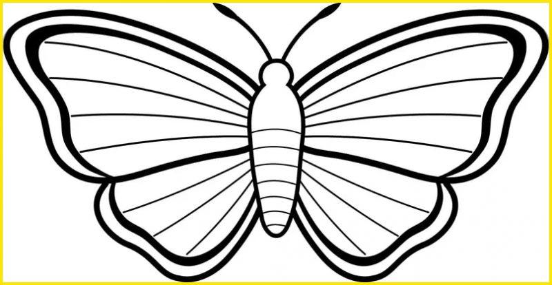 gambar mewarnai kupu kupu bentuk sederhana