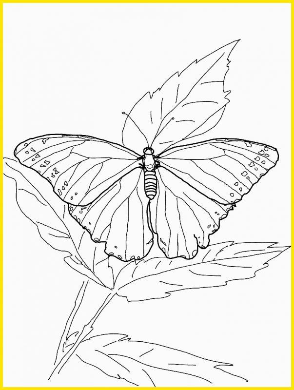 gambar mewarnai kupu kupu dan daun