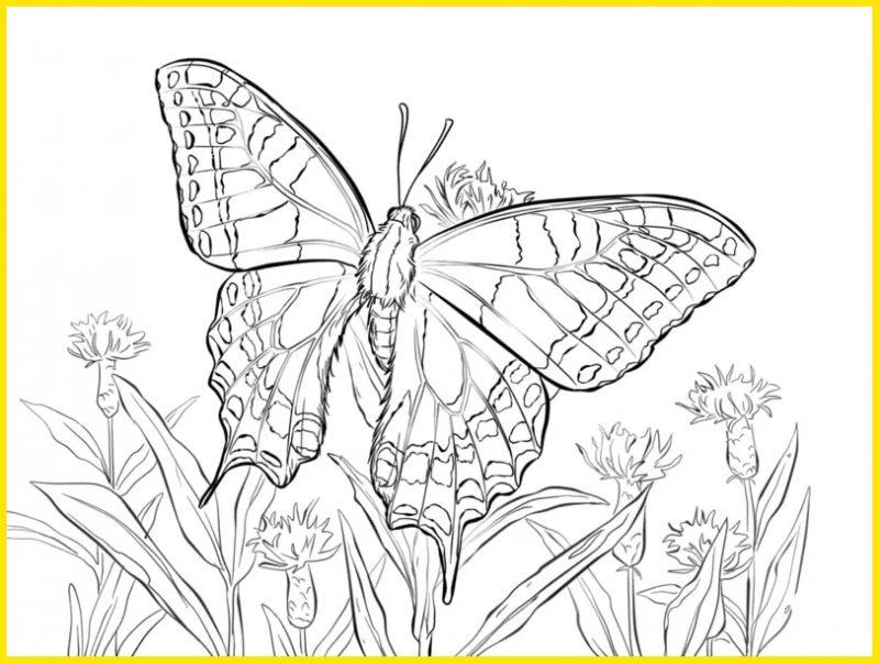gambar mewarnai kupu kupu daun dan bunga