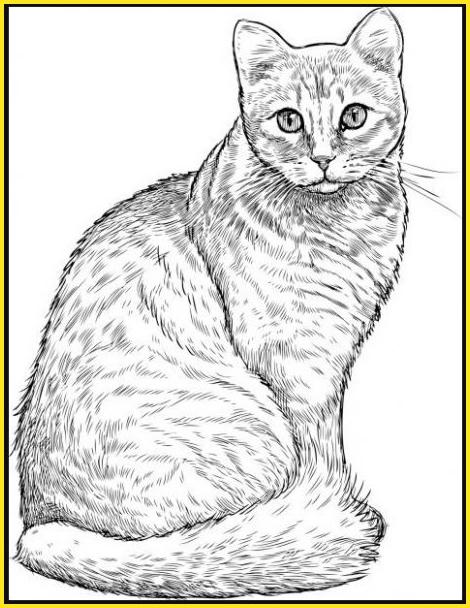 gambar sketsa kucing tampak samping
