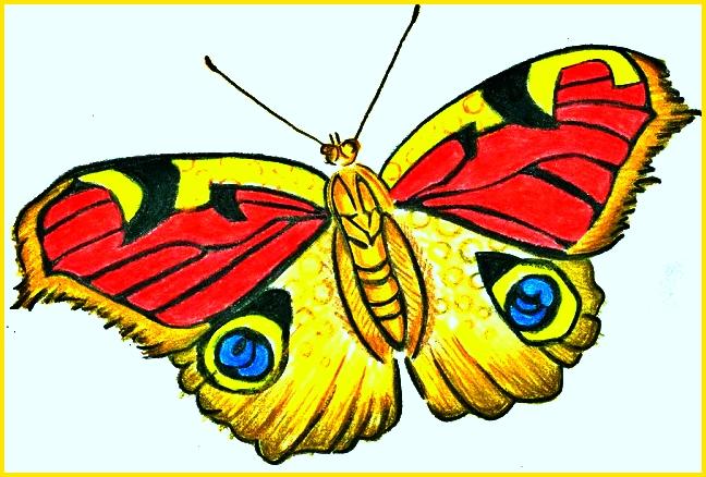 gambar sketsa kupu kupu keren
