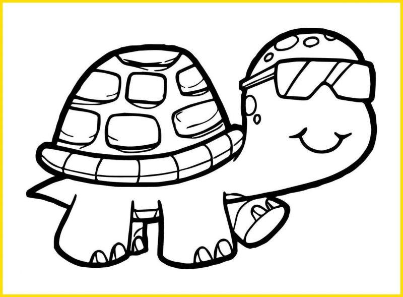 gambar sketsa kura kura lucu