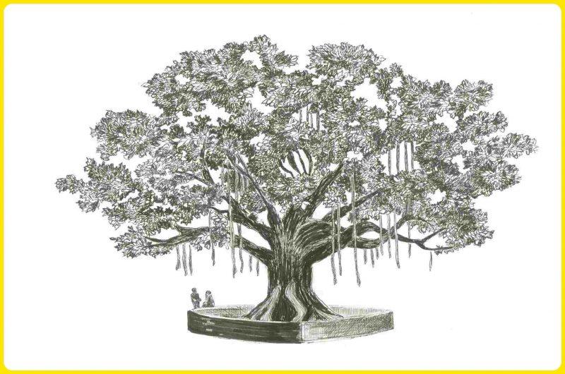 gambar sketsa pohon bringin rimbun