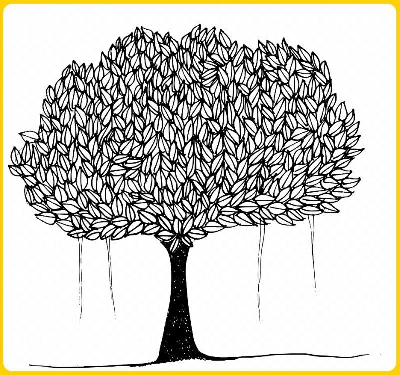 gambar sketsa pohon bringin