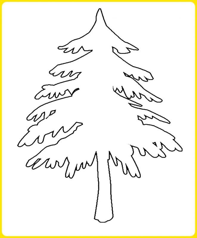 gambar sketsa pohon cemara