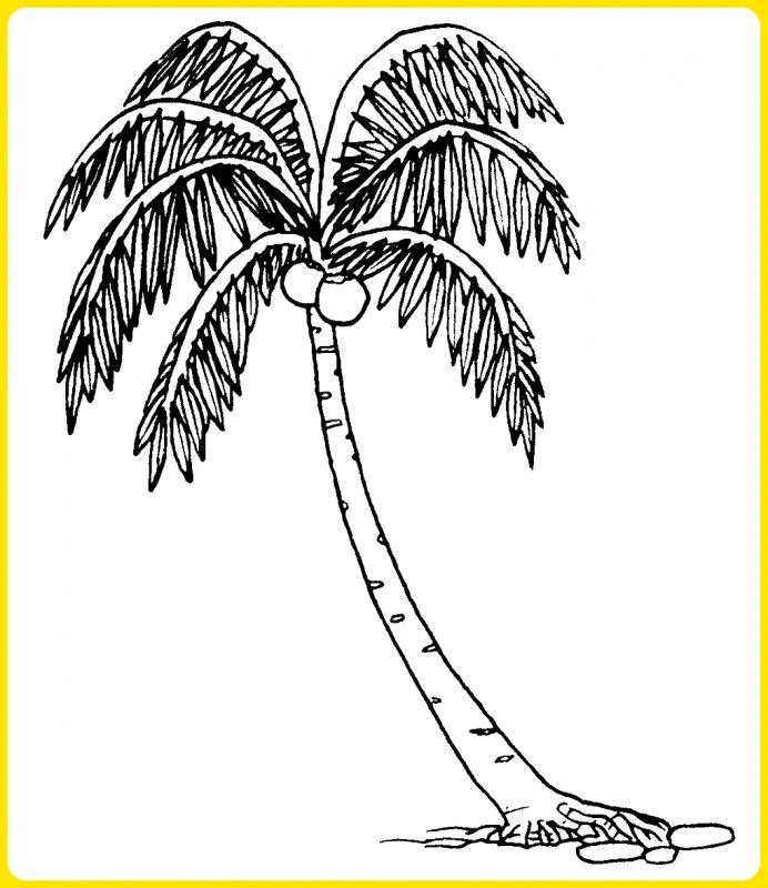 gambar sketsa pohon kelapa tua