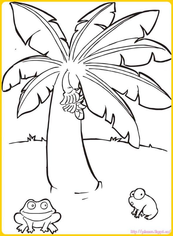 gambar sketsa pohon pisang