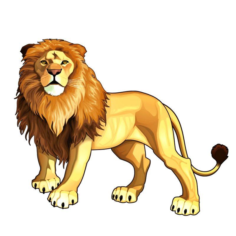 gambar vector singa gagah dan kekar