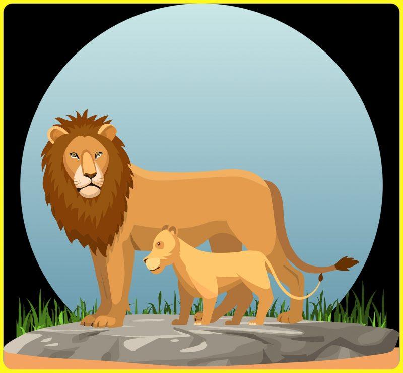 gambar vector singa jantan