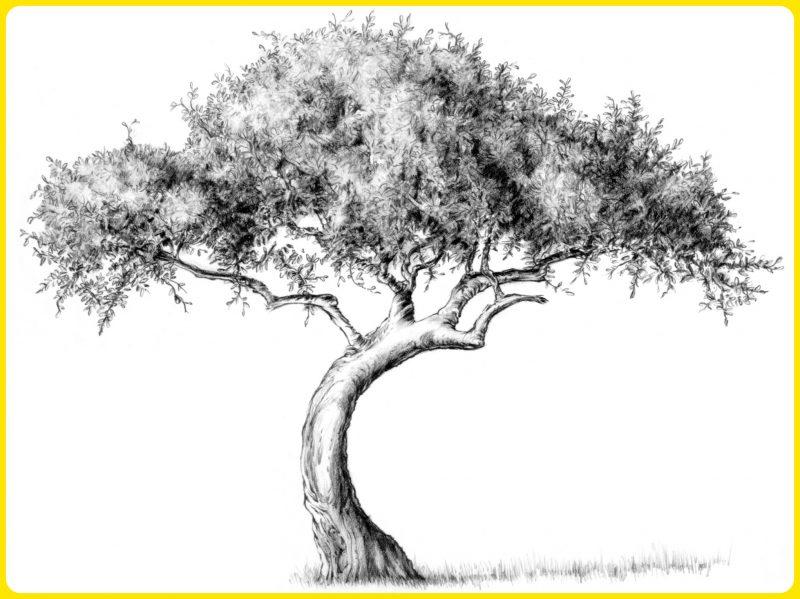 menggambar sketsa pohon