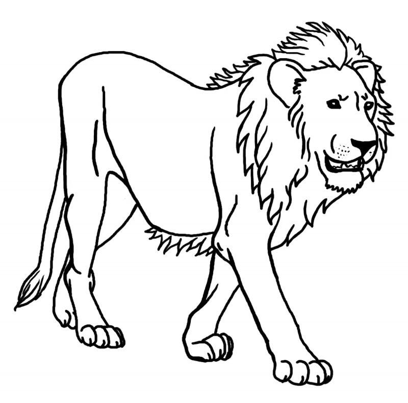 mewarnai singa sederhana