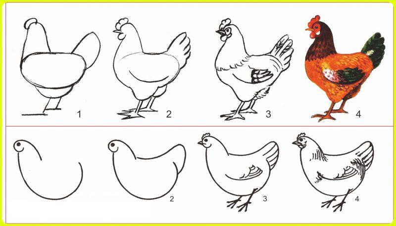 pola sketsa ayam