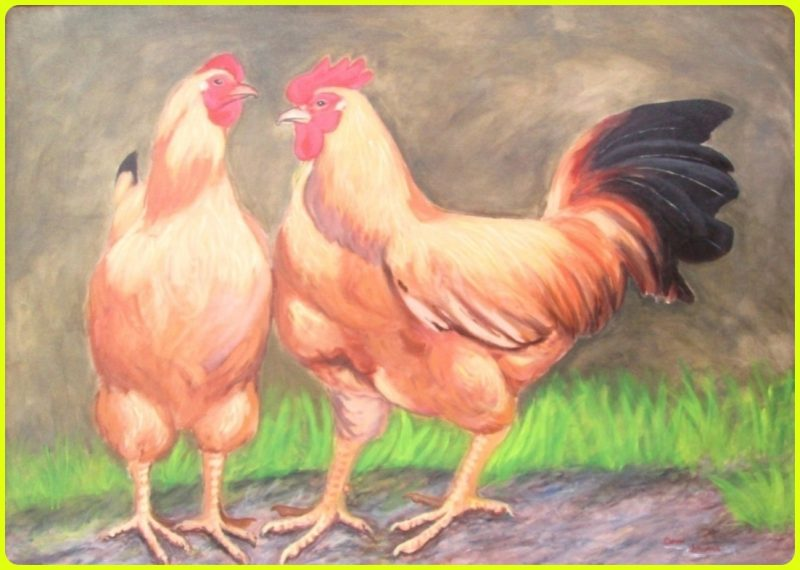 sketsa ayam berwarna