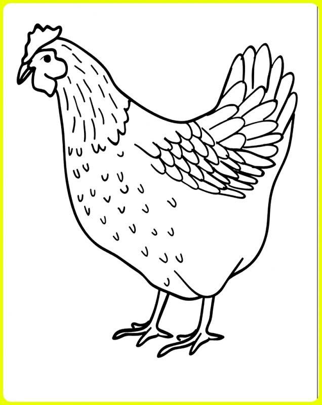 sketsa ayam betina sederhana