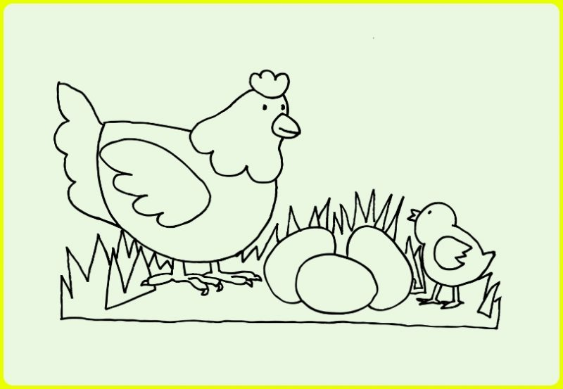 sketsa ayam dan anaknya beserta telur