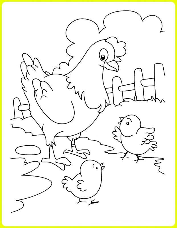 sketsa ayam dan anaknya