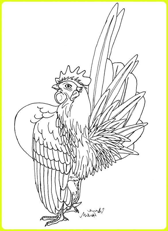 sketsa ayam kate