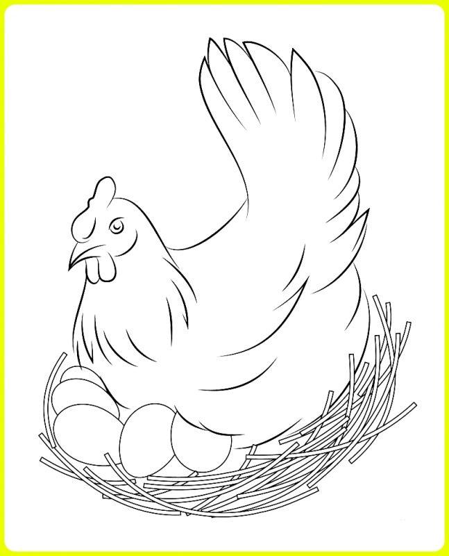 sketsa ayam mengerami telur