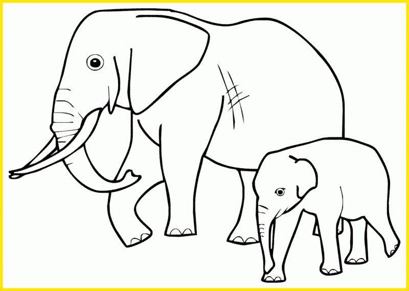 sketsa gajah dan anaknya