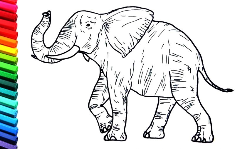 sketsa gajah