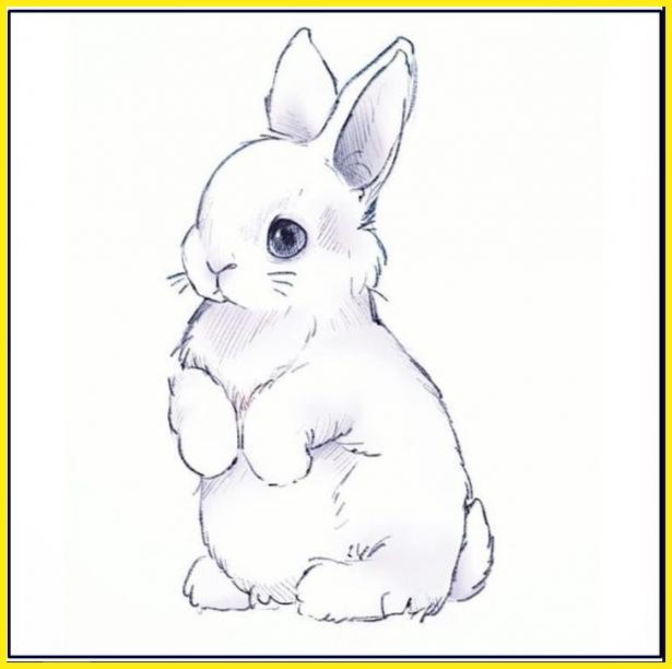 sketsa gambar kelinci berdiri serong