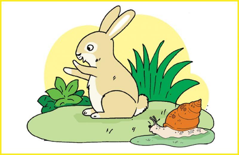 sketsa gambar kelinci dan siput