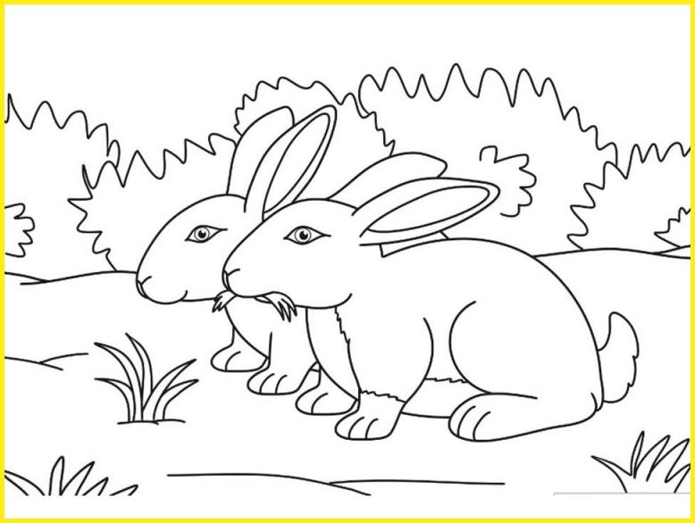 sketsa gambar kelinci di taman memakan rumput