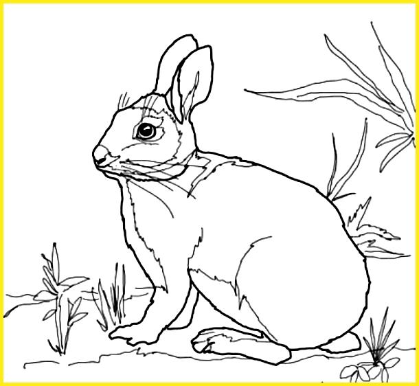 sketsa gambar kelinci di taman