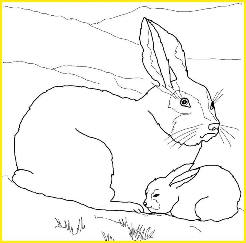 sketsa gambar kelinci hitam putih induk dan anaknya