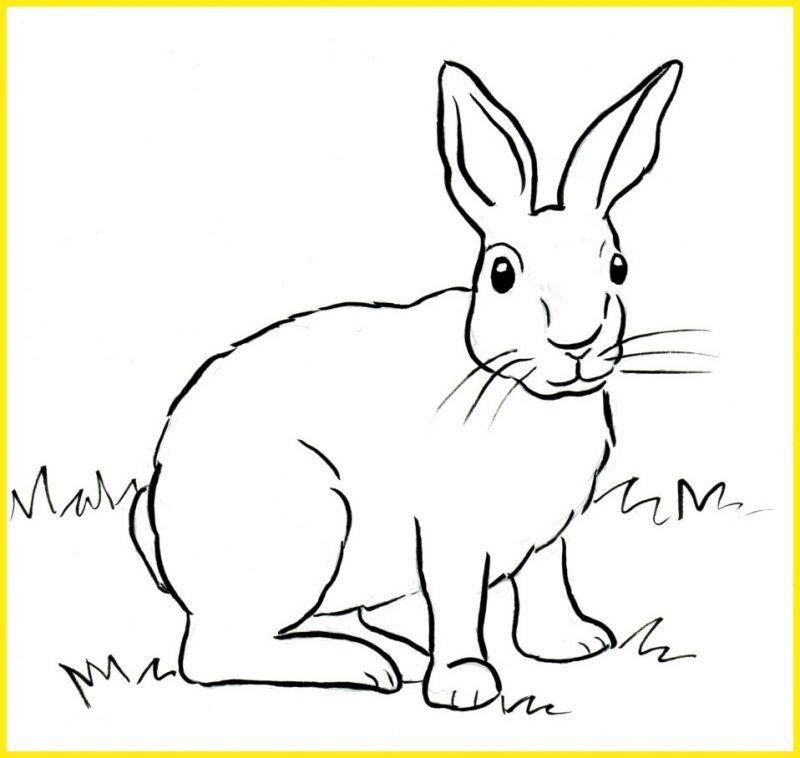 sketsa gambar kelinci hitam putih