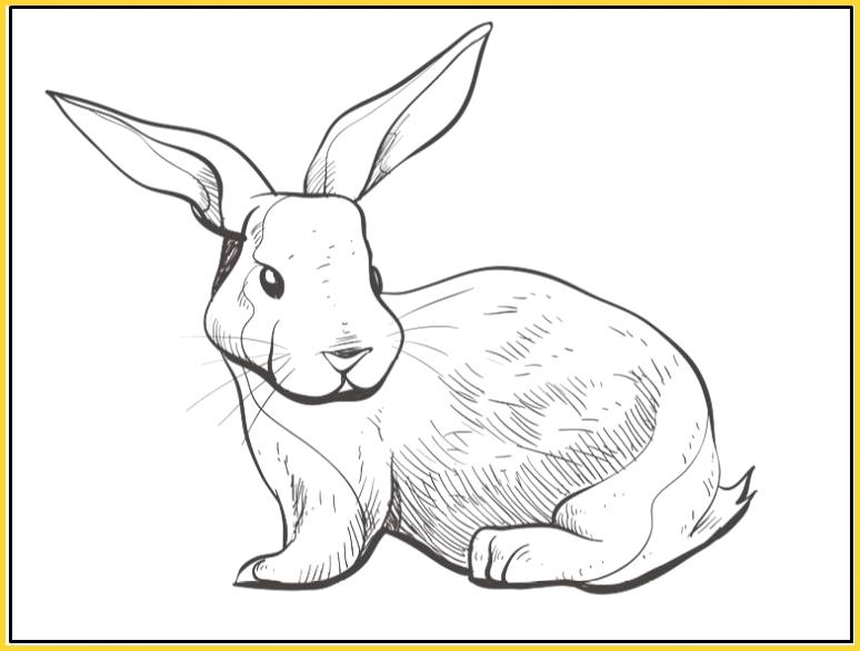 sketsa gambar kelinci lucu dan bagus