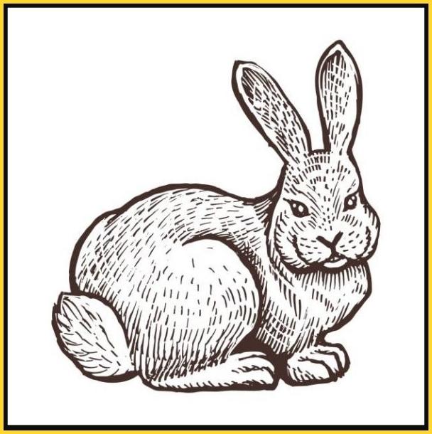 sketsa gambar kelinci lucu kartun