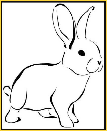 sketsa gambar kelinci lucu