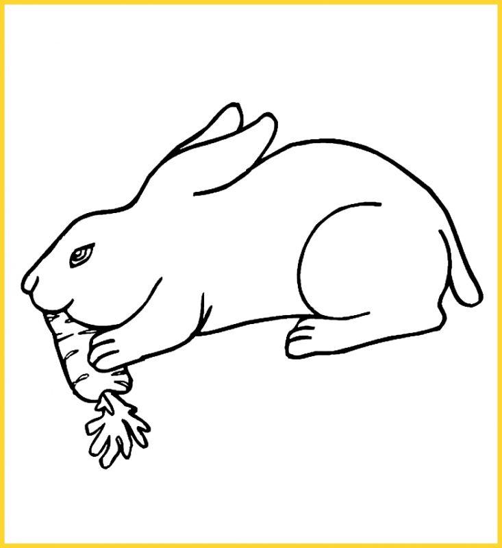 sketsa gambar kelinci makan wortel