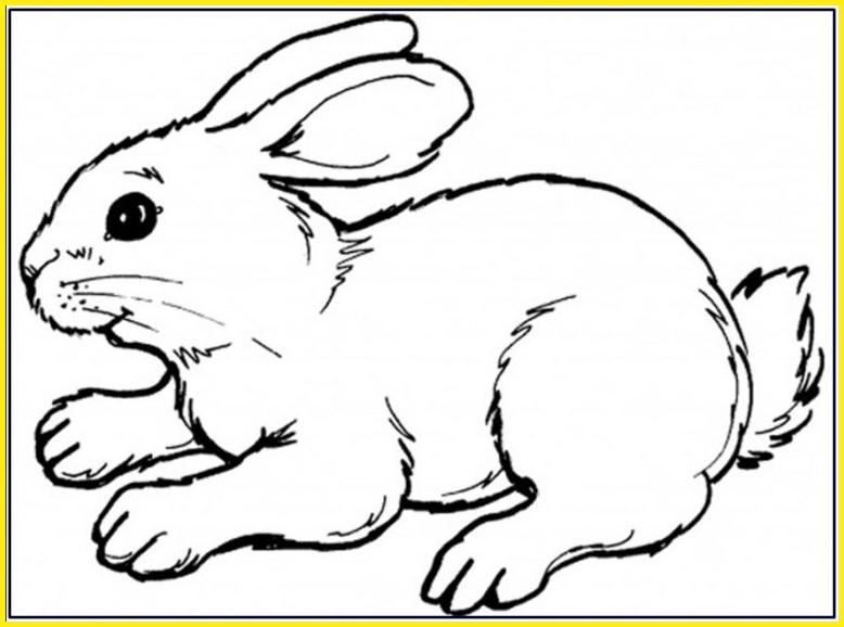 sketsa gambar kelinci sederhana dan keren