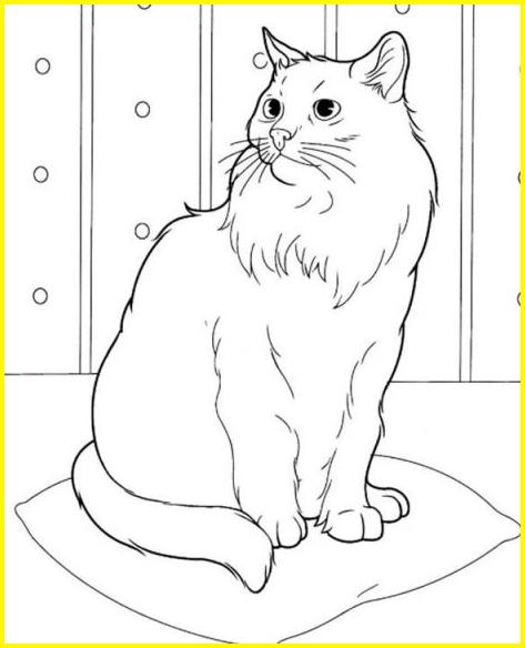 sketsa gambar kucing anggora mahal