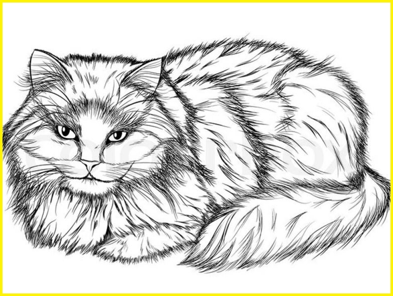 sketsa gambar kucing hitam putih bulu panjang
