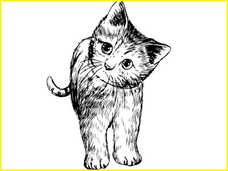sketsa gambar kucing hitam putih