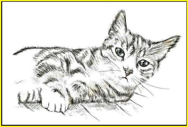 sketsa gambar kucing imut dan lucu selfie