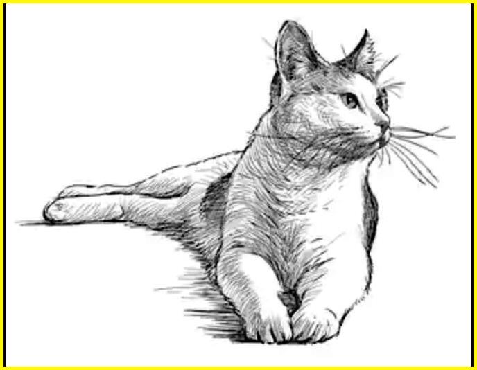 sketsa gambar kucing lucu dan unik