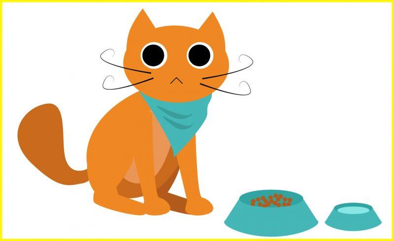 sketsa gambar kucing makan