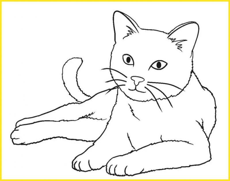 sketsa gambar kucing sederhana berpose model
